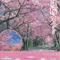 さくら祭2 (1)